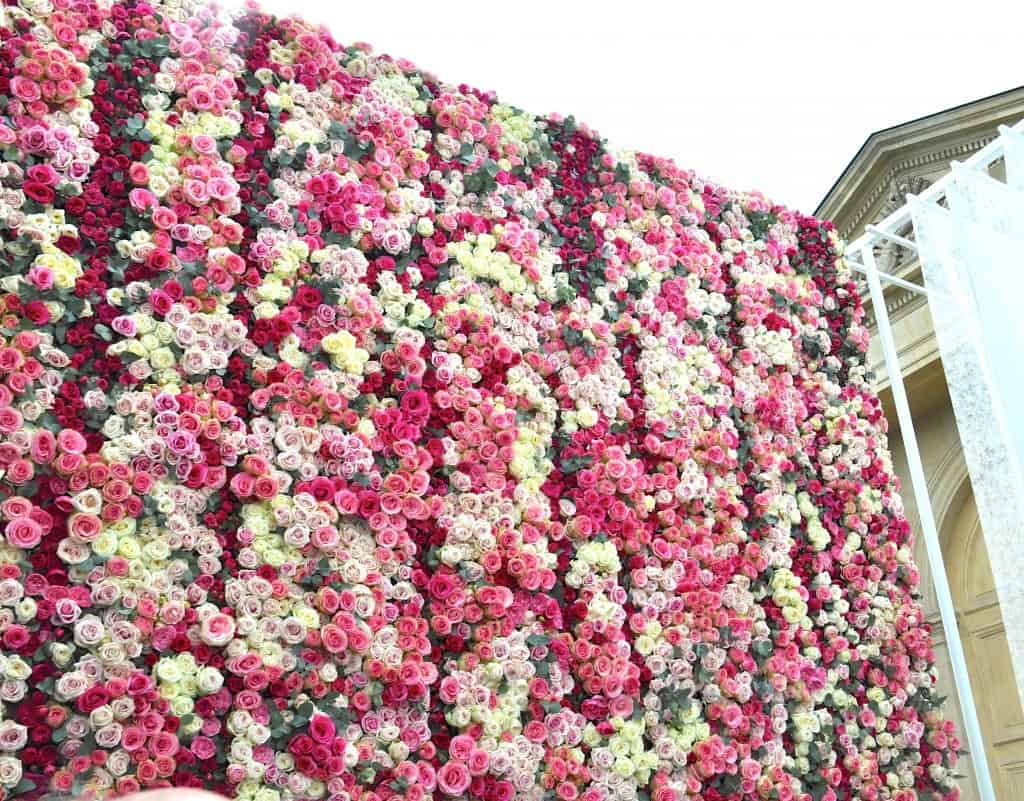 Cascading Wall of Roses