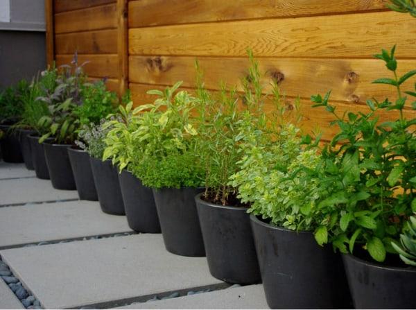 Fresh Garden Space