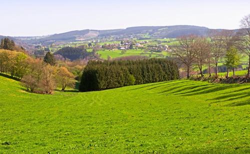 classy_grass