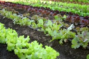 1280033_organic_vegetable_garden