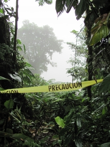 rainforest caution