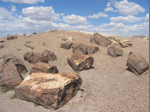 petrifiedwood1