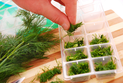 herb_ice_cubes_small