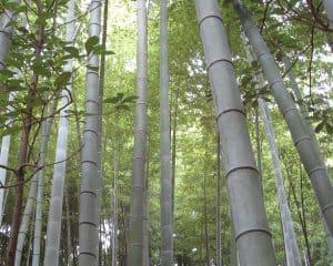 bamboo-958559_960_720