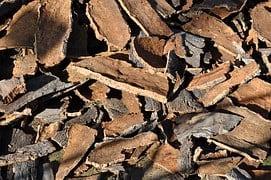 cork-oak-505263__180