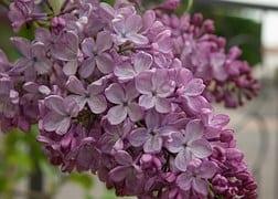 flower-1341520__180