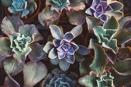 succulent-1031541__180