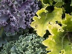 vegetables-940177__180