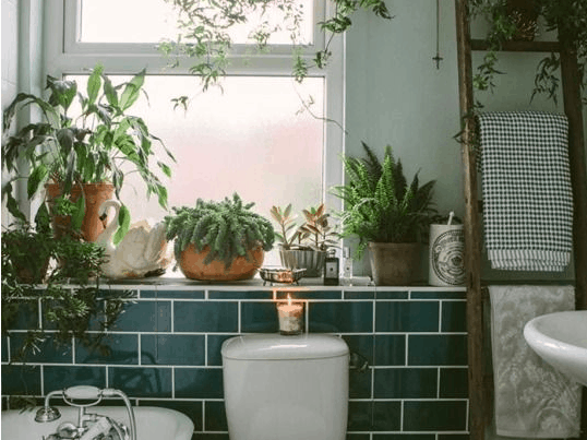 Four Reasons To Get A Shower Plant