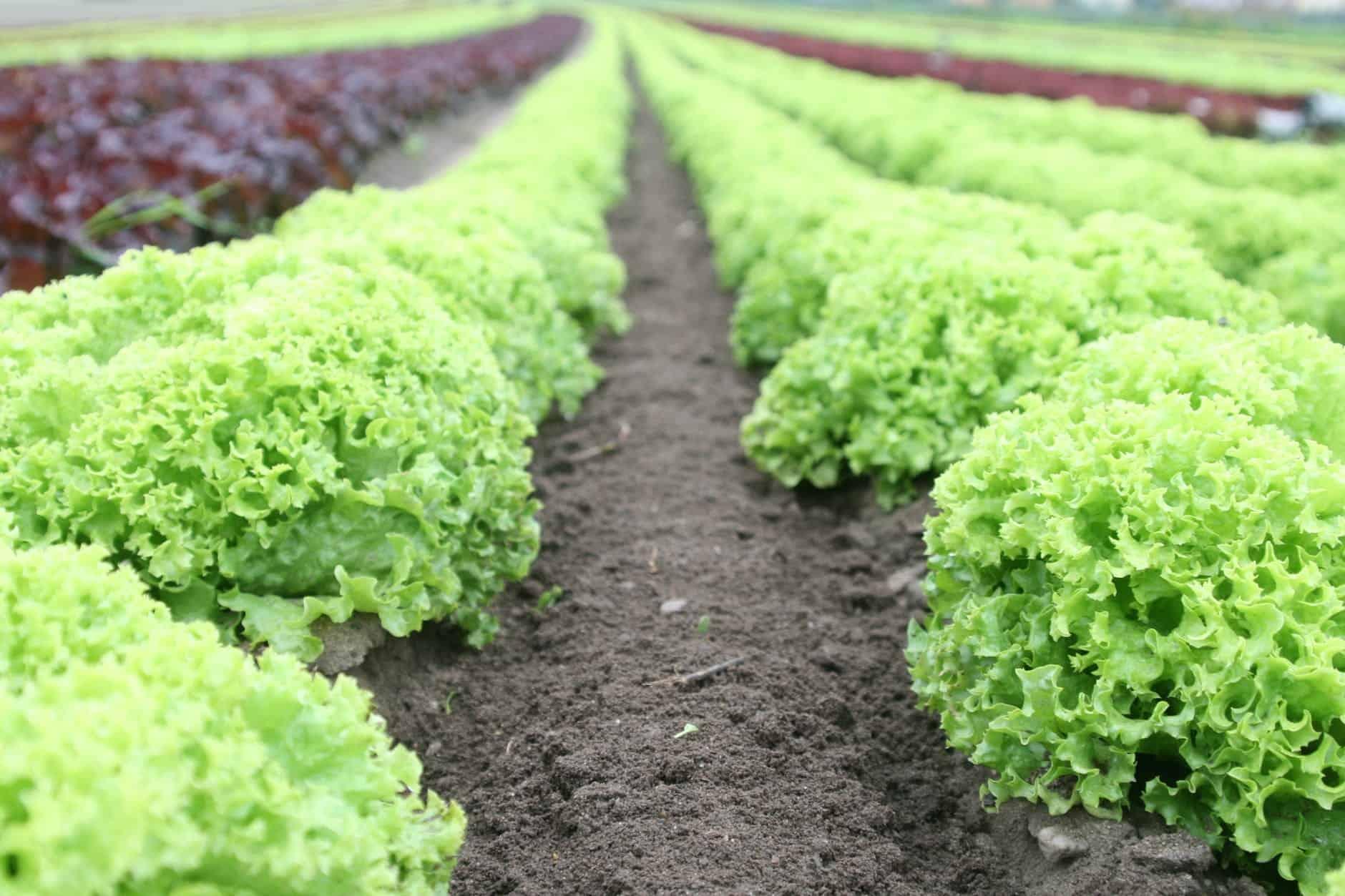 growing vegetable worth it
