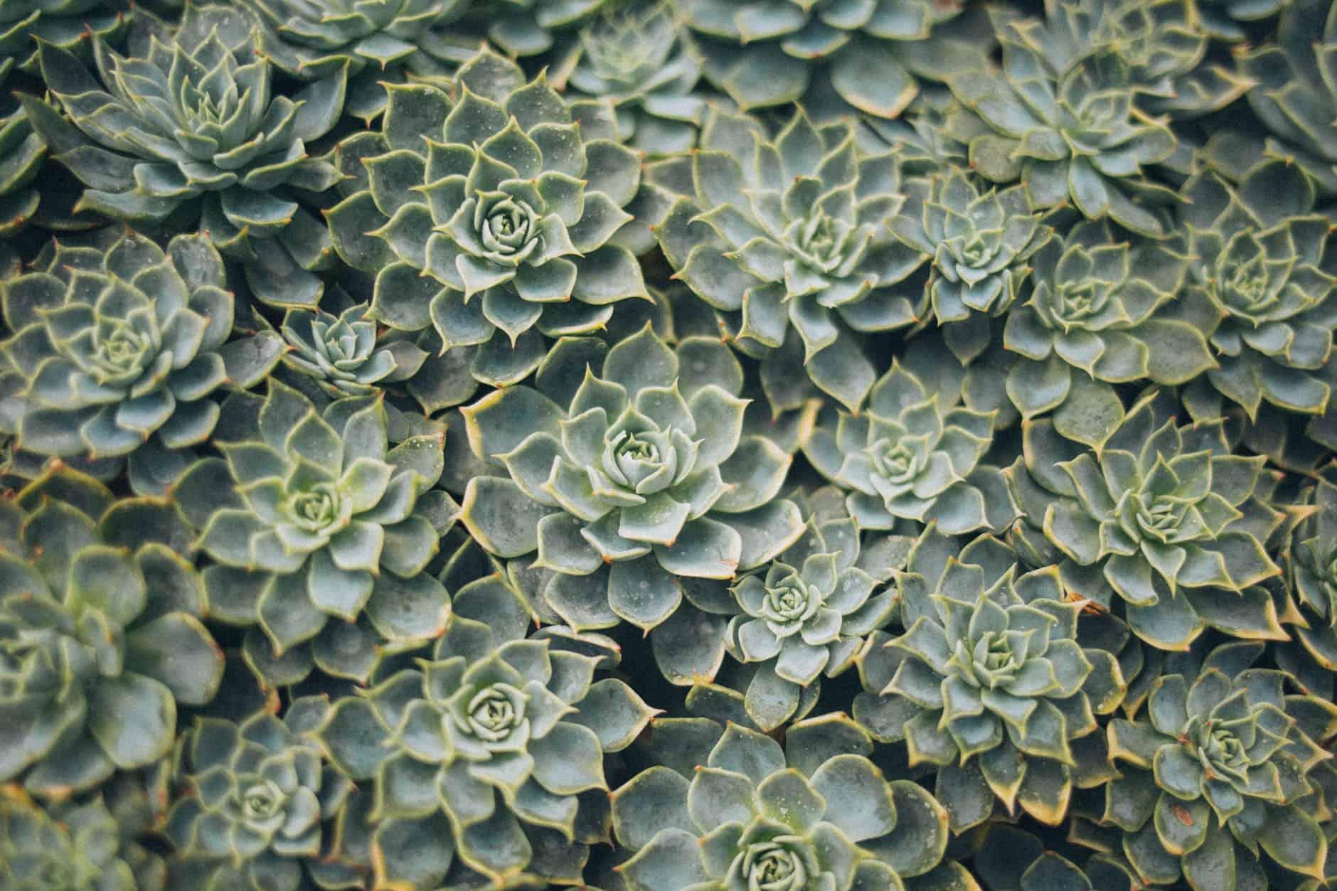 succulent garden trend