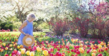 flowers in cottage garden
