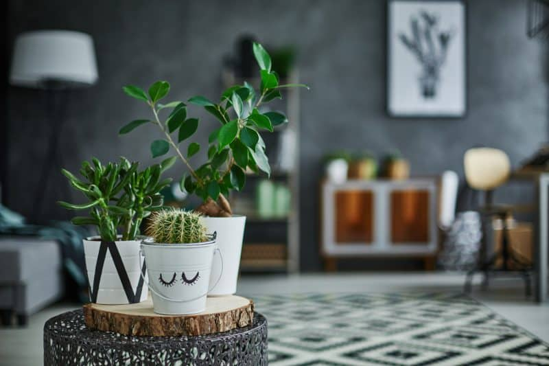 Decorating with Houseplants